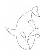 Balena da colorare 8
