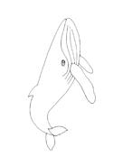 Balena da colorare 30