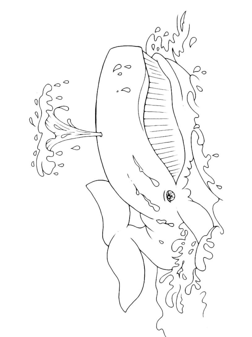 Balena da colorare 35