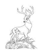 Bambi da colorare 79
