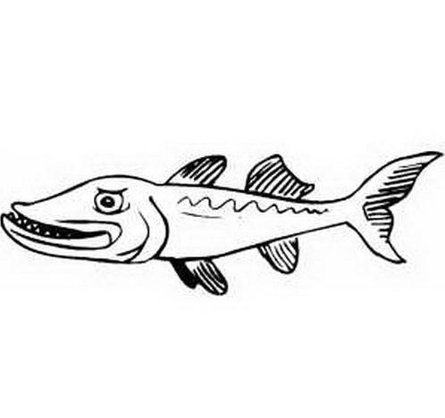 Pesce da colorare 8