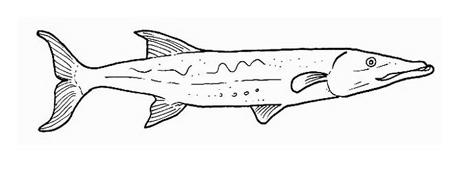 Pesce da colorare 11