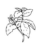 Verdura da colorare 6