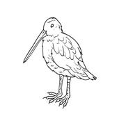 Uccello da colorare 9