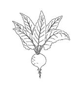 Verdura da colorare 8