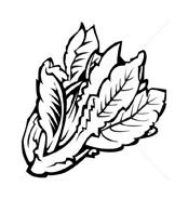Verdura da colorare 9