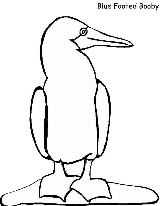Uccello da colorare 11