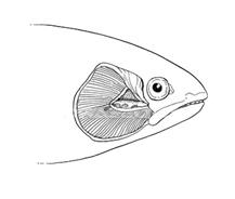 Pesce da colorare 12