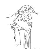 Uccello da colorare 12