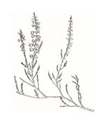 Arbusto da colorare 11
