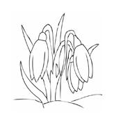 Fiore da colorare 4