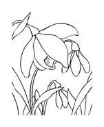 Fiore da colorare 6