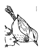 Uccello da colorare 13