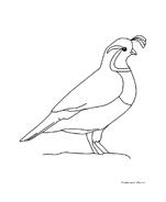 Uccello da colorare 15