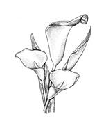 Fiore da colorare 9