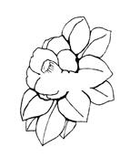 Fiore da colorare 17