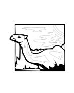 Cammello da colorare 4