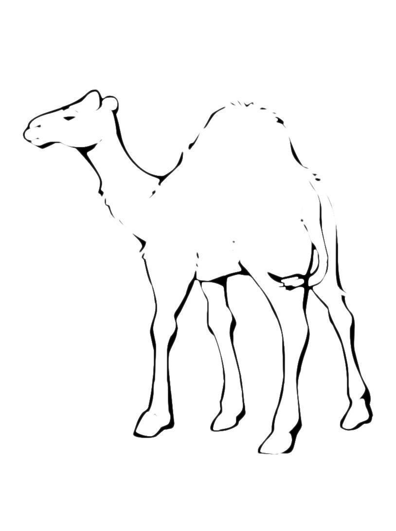 Camello da colorare 9
