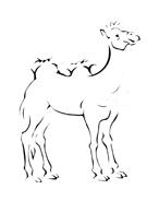 Cammello da colorare 18