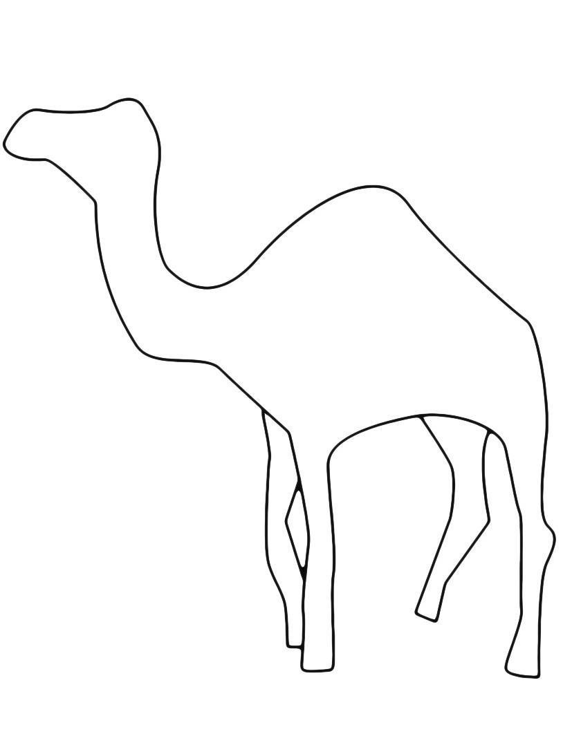 Camello da colorare 21