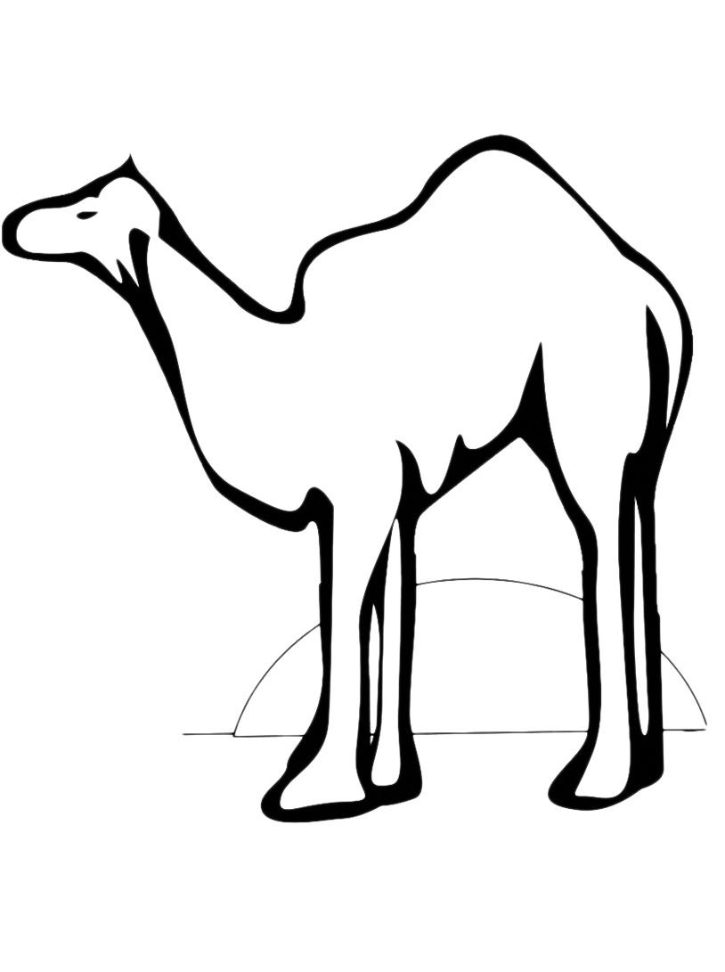 Camello da colorare 23