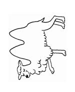 Cammello da colorare 27