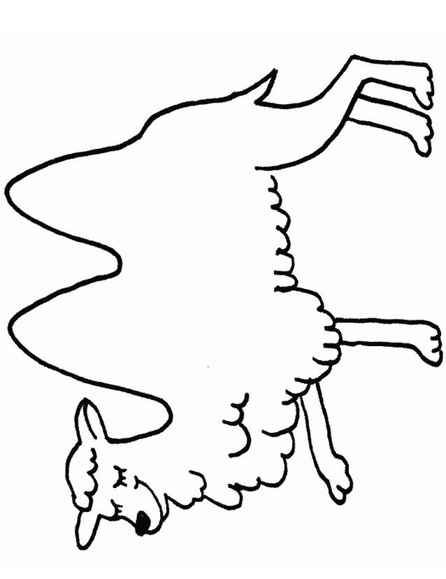 Camello da colorare 27