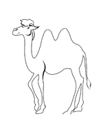 Cammello da colorare 29