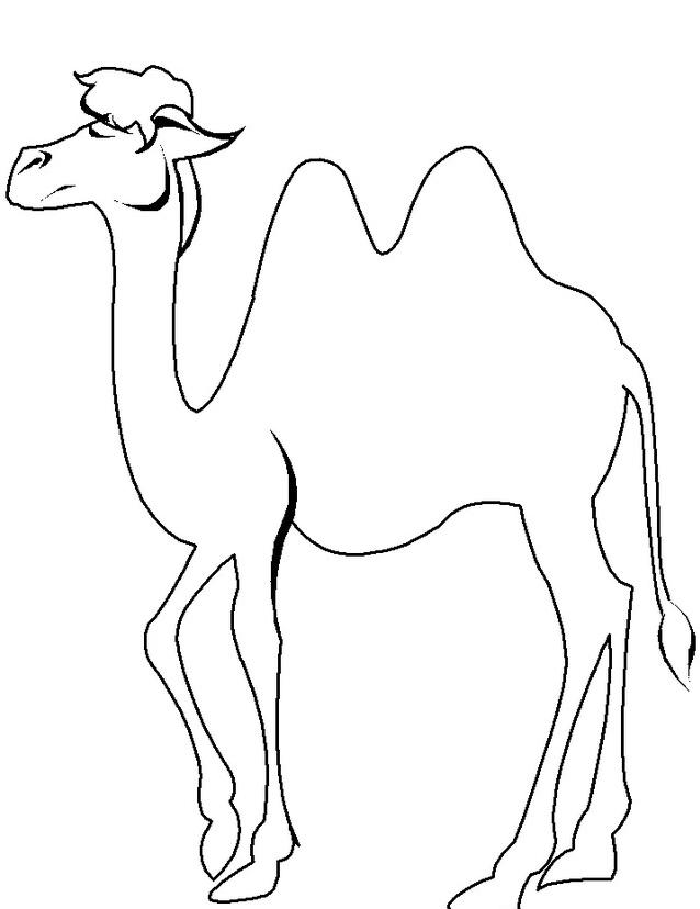 Camello da colorare 29