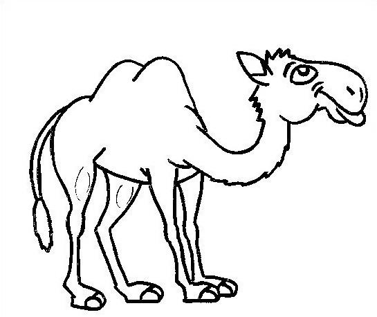 Camello da colorare 40