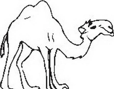 Camello da colorare 41