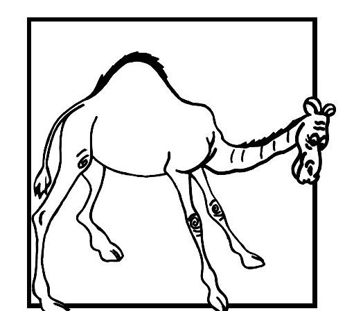 Camello da colorare 43