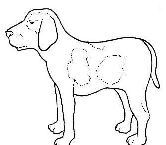 Cane da colorare 107