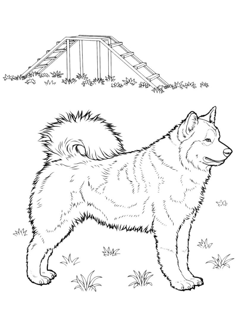 Cane da colorare 172
