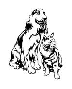 Gatti da colorare 12