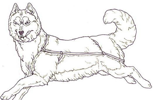 Cane da colorare 177
