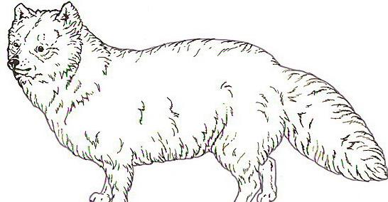 Cane da colorare 179
