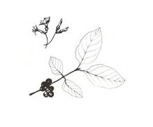 Arbusto da colorare 12