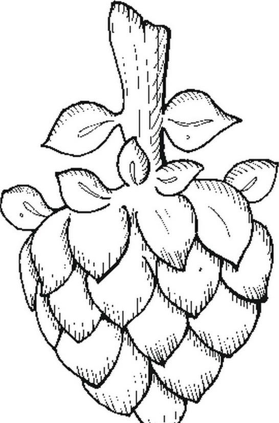 Verdura da colorare 15