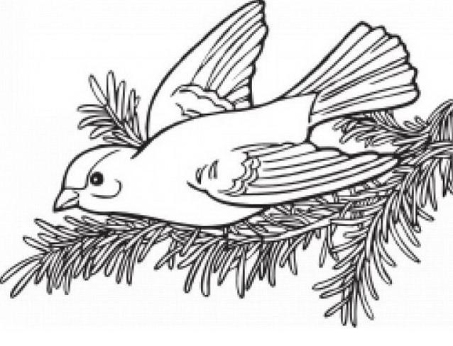 Uccello da colorare 17