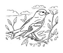 Uccello da colorare 18