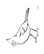 Uccello da colorare 19