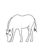 Cavallo da colorare 2