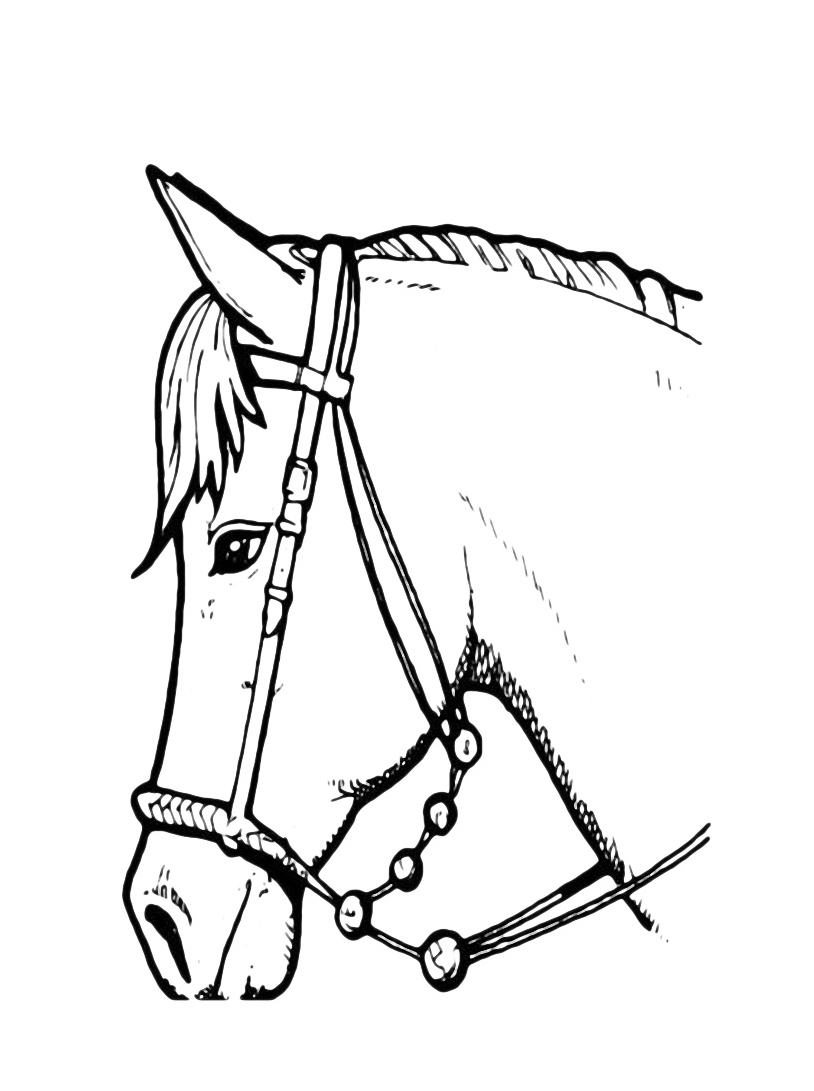 Cavallo da colorare 7
