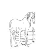 Cavallo da colorare 9