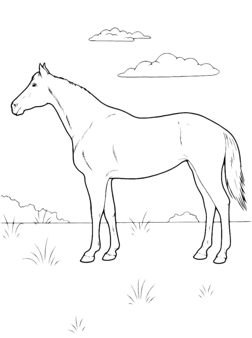 Cavallo da colorare 12