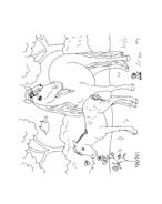 Cavallo da colorare 27