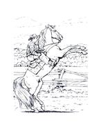 Cavallo da colorare 32
