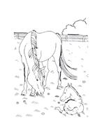 Cavallo da colorare 34