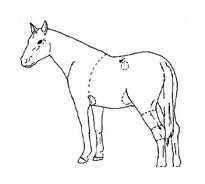 Cavallo da colorare 45